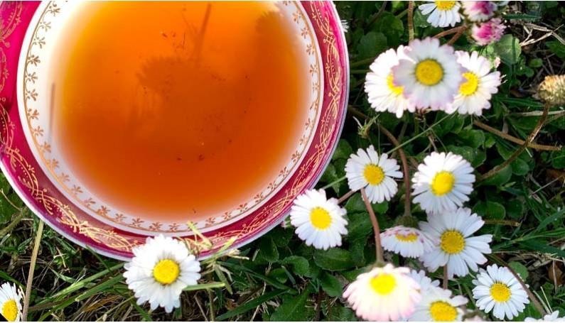 Le thé vert, le thé de la minceur