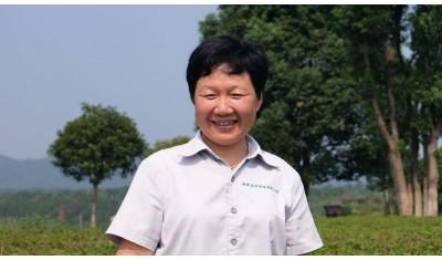 Portrait d'une cueilleuse de thé bio dans le Hunan (Chine).