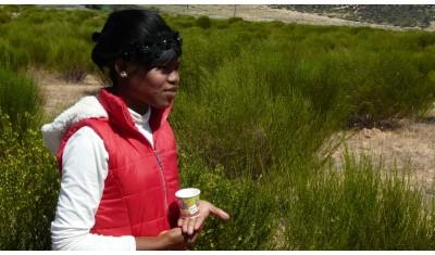 Nicolène Van Wyk nous parle de son travail dans les plantations de Rooibos